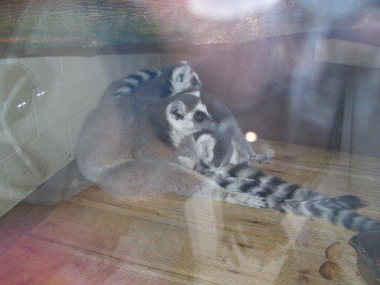 Utica Zoo: Wish the animals had more room to roam