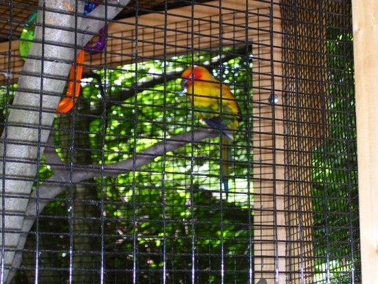 Utica Zoo: So colorful!