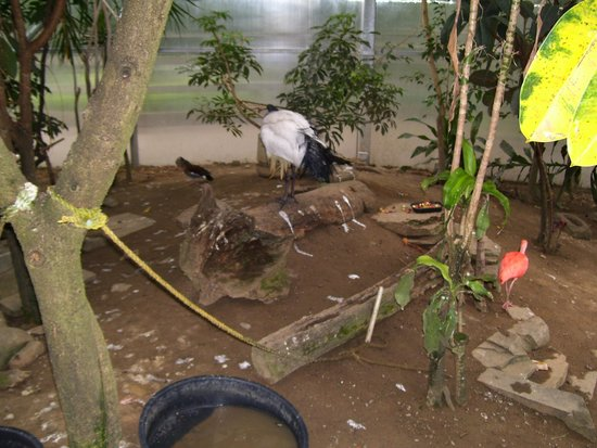Utica Zoo: Great aviary section