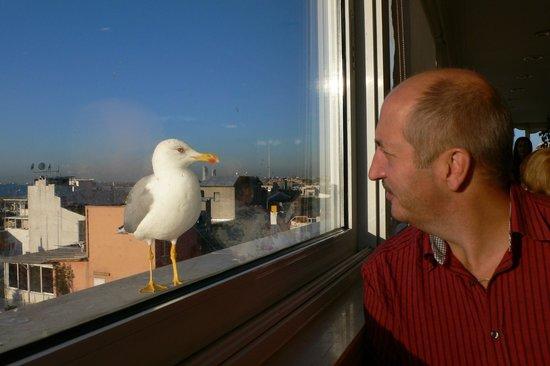 Yaztur Hotel: в ресторане отеля, чайка интересуется!