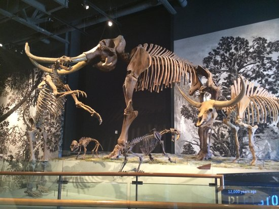 Natural History Museum of Utah: Mammoth, bear, cat and bison.
