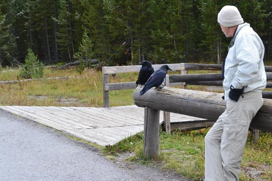 Artist Point : Nice Man and Ravens