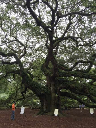 Angel Oak Tree : So many signs