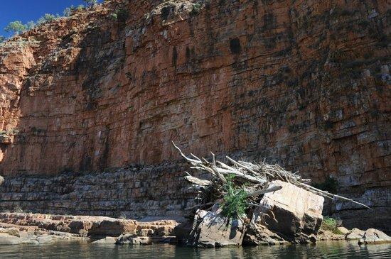 El Questro Homestead : Gorge cruise