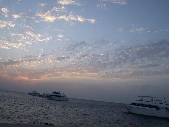 Beach Albatros Resort: NAPFELKELTE...