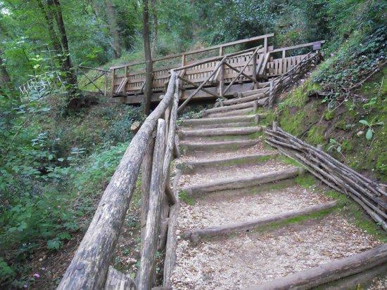 parte del sentiero con gradini e ponte foto di bosco di