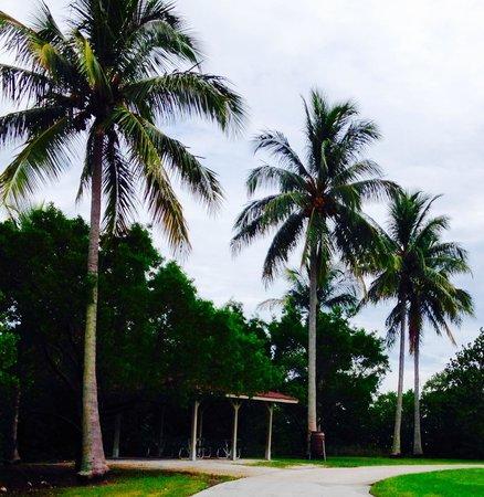 Burt Reynolds Park: Picnic pavilions