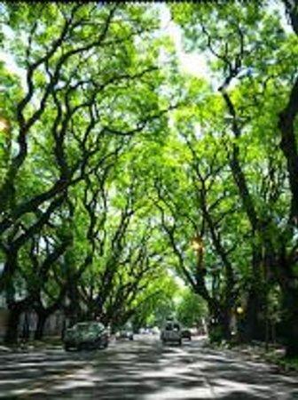 Hotel del Casco: beautiful trees in San Isidro
