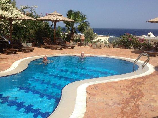 Reef 2000 : Pool at Bedouin Moon Hotel
