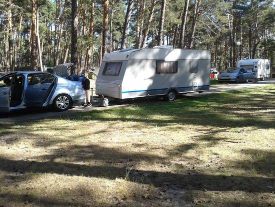 Camping Urbion : Magnífica arboleda