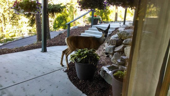 Cashmere Mountain Bed & Breakfast: Our wildlife