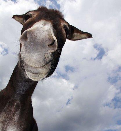 Salt Cay: hello donkey