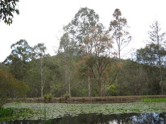 Barney Creek Cottages: This is a view of the mountain just behind the cottage