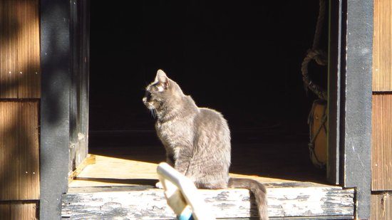 Historic Anchor Inn: cat in the door