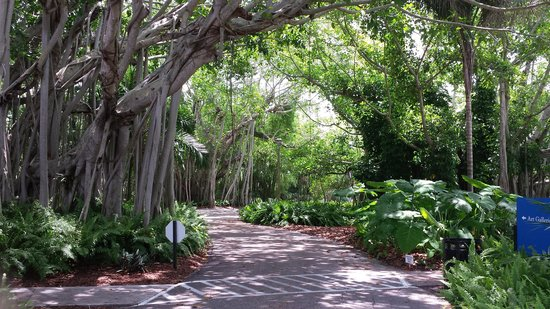 The Ringling: Mangrove trees