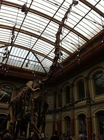 Museum fur Naturkunde (Natural History Museum) : Surpreendente!!