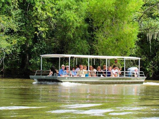 Dr. Wagner's Honey Island Swamp Tours: Honey Island swamp boat
