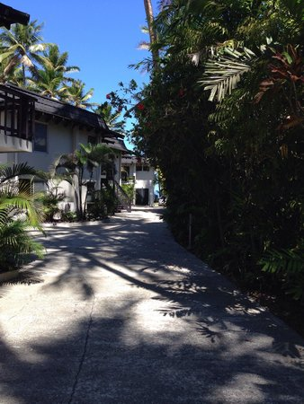 ULTIQA at Fiji Palms Beach Resort : Resort rooms along the long drive lined with golden cane palms.