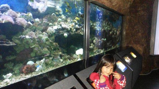 Sea World : seaworld