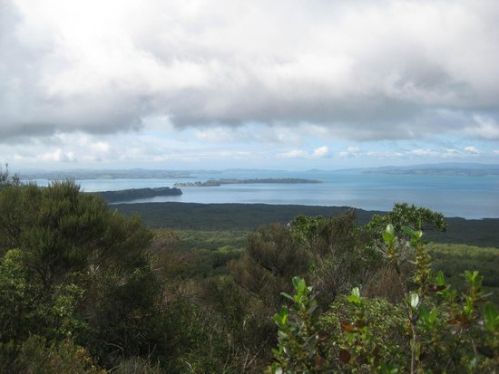 Rangitoto Island: A view from the top