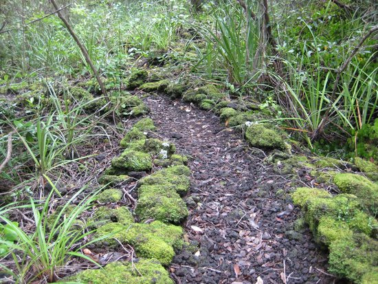 Rangitoto Island: Well maintained trail through lush forest