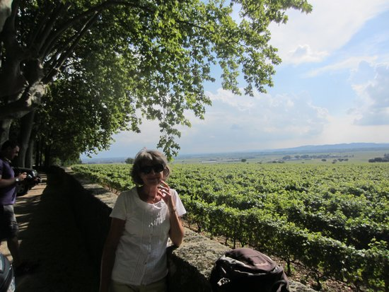 Provence and Wine : Chateauneuf du Pape vines