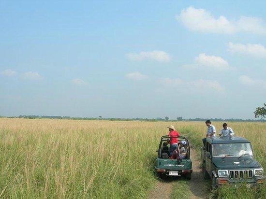 Pobitora Wildlife Sanctuary: Jeep Safari