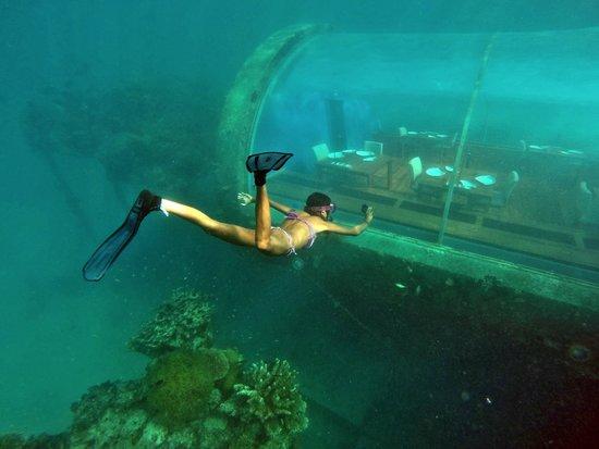 We dived down picture of ithaa undersea restaurant for Maldivas hotel bajo el agua