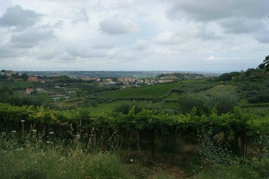 Fiori di Campo B&B: A local view