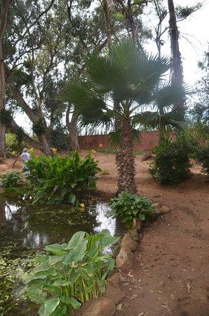 Jardin exotique picture of exotic gardens of rabat sale rabat tripadvisor - Jardin exotique sale nice ...