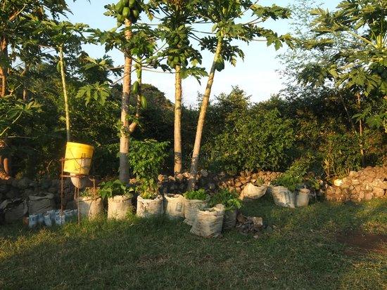 Wayando Beach Eco Lodge: bag gardens