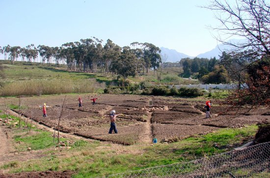 Old Town Tulbagh : Communal produce garden
