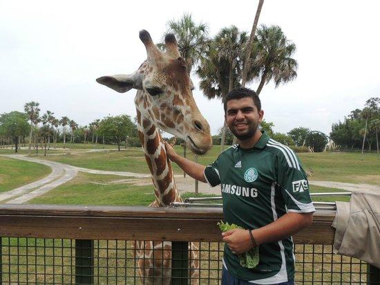 Serengeti Safari Picture Of Busch Gardens Tampa