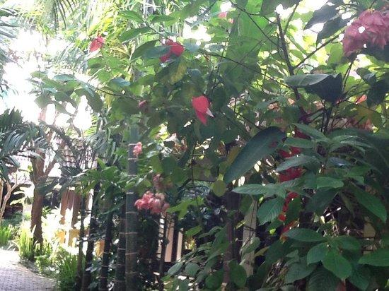 Laluna Hotel and Resort: Jardin