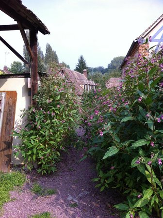 La Levriere : Butterfly bushes at walkway to parking space for three bedroom gite