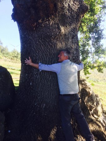 Arlena di Castro, Italia: La quercia più antica d'Italia con otto secoli di storia