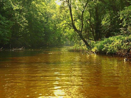Primorsko, Bulgaria: Ropotamo river