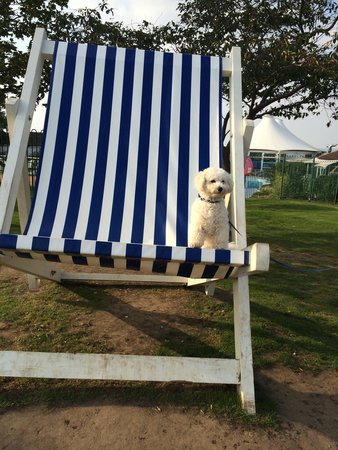 Allhallows Holiday Park - Haven: Bailey enjoying his first Haven holiday