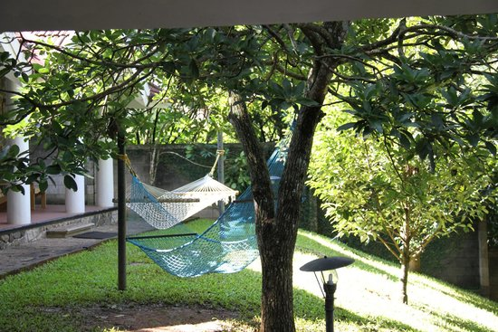 Hotel Treetop: Swinging hammocks in front of the cottages