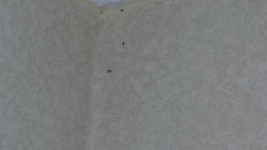 Holiday Inn Saint Louis West Six Flags: insects trapped in one of several spider webs lining ceiling