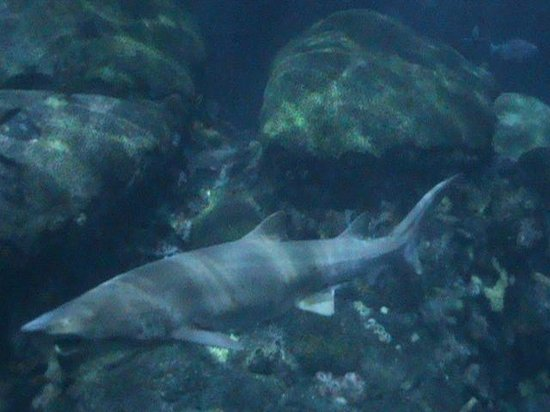 Bonnethead Shark And Rays In The Touch Tank Picture Of