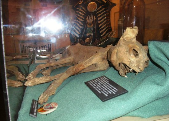 T.T. Wentworth Jr. Florida State Museum: Petrified Cat