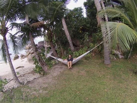 Bedarra Island Resort: Hammock by the beach