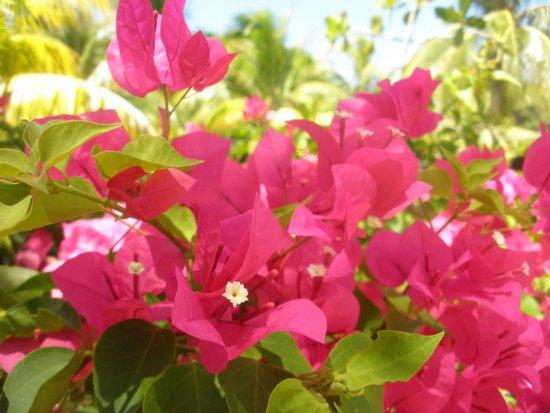 Royalton Hicacos Varadero Resort & Spa: Beautiful flowers
