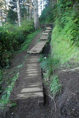 Cape Lookout State Park: Cape Lookout Trail - Steps along the trail