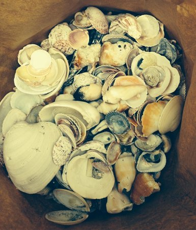 Waterside Inn on the Beach: Gifts from the sea!