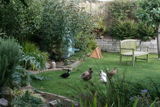 Ramsey House: Ducks enjoying the park-like backyard