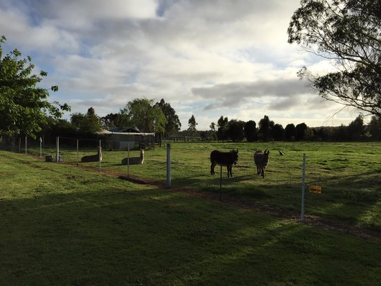 Rayanne Homestead : Animals on the property