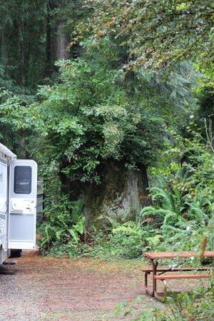 The Redwoods RV Resort: site 31