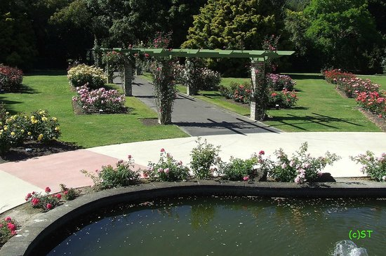Rose Garden and Pond - Picture of Victoria Esplanade Gardens ...
